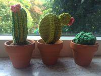 180908_Cactus